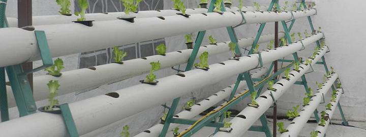 Optimización de invernaderos con tecnología 4.0