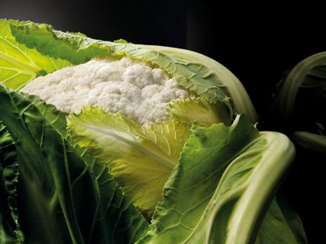 BioWaste2PACK: un paso adelante en la valorización de biorresiduos para la industria del envase